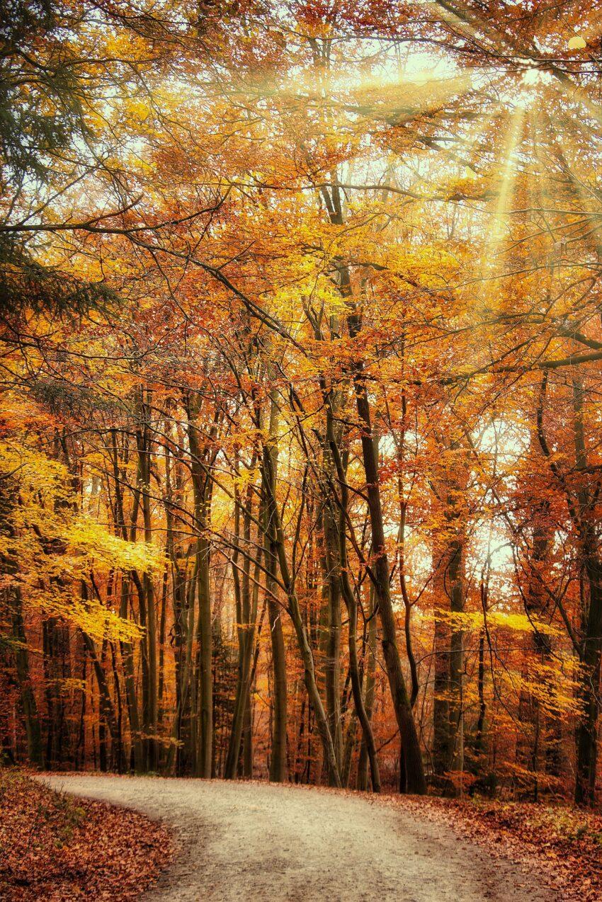 Spacer po lesie jesienną porą
