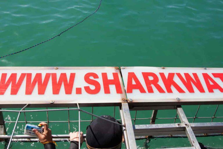 Morze rekinów